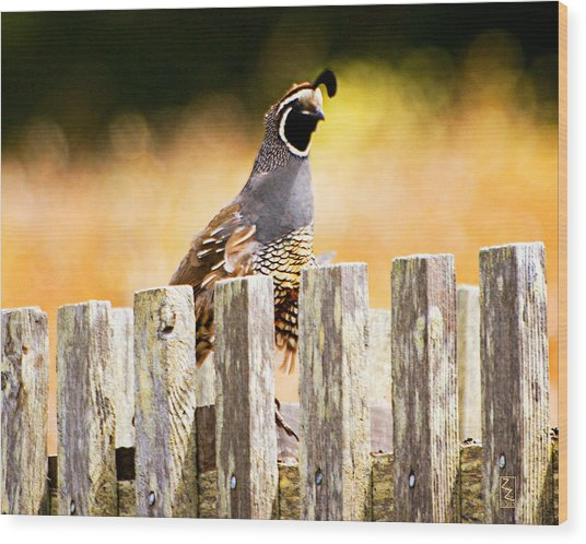 Quail Lookout Wood Print