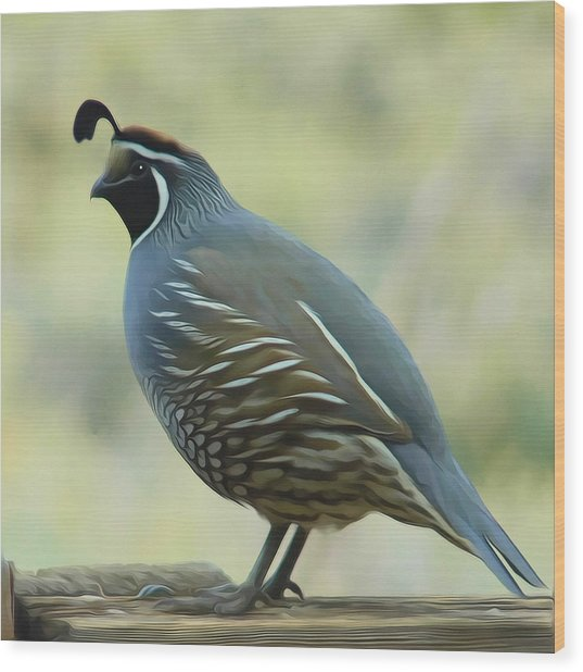 Quail On A Rail By Frank Lee Hawkins Wood Print