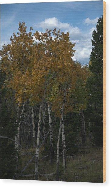 Quaking Aspen Wood Print