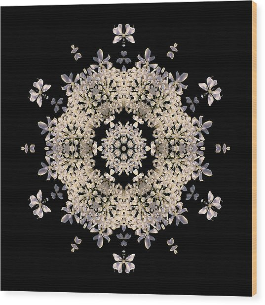 Queen Anne's Lace Flower Mandala Wood Print