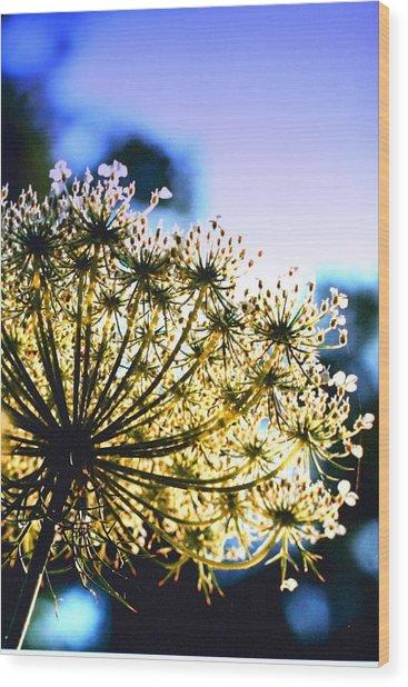 Queen Anne's Lace II Wood Print by Diane Merkle