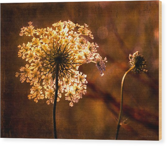 Queen Annes Lace Vintage Wood Print