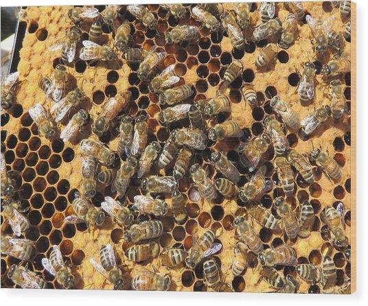 Queen Bee And Her Attendants Wood Print