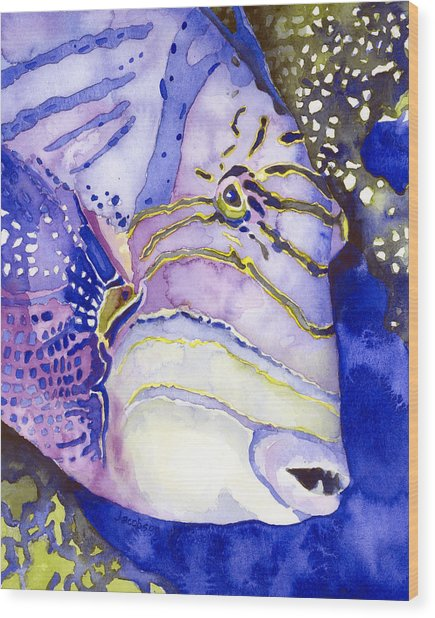 Queen Triggerfish Portrait Wood Print