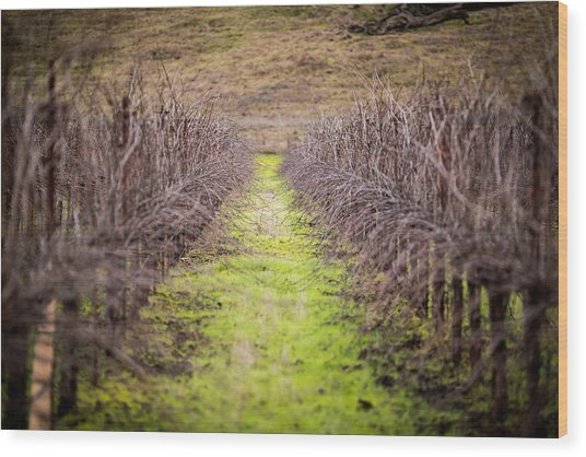 Quiet Vineyard Wood Print