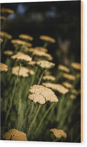 Quivering Yarrow Wood Print