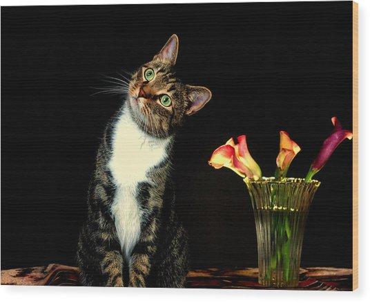 Quizzical Cat Wood Print by Linda Mcfarland