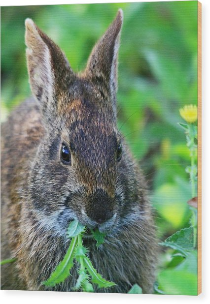 Rabbit Food Wood Print
