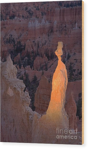 Rabbit Sunset Point Bryce Canyon National Park Wood Print