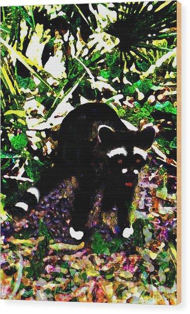 Racoon At Faver-dykes Park Wood Print by Dane Ann Smith Johnsen