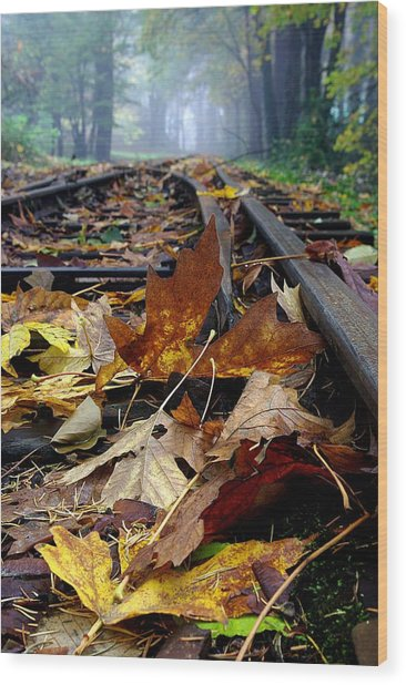 Rails And Leaves Wood Print