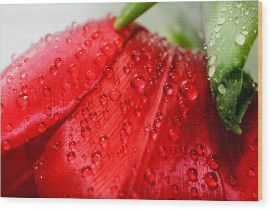 Rain Drops Wood Print by Ivelin Donchev
