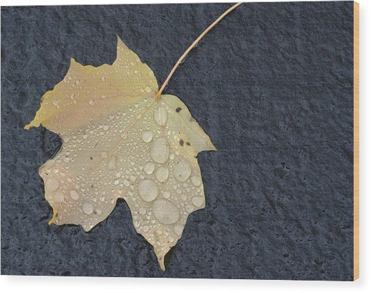 Rain Drops On A Yellow Maple Leaf Wood Print