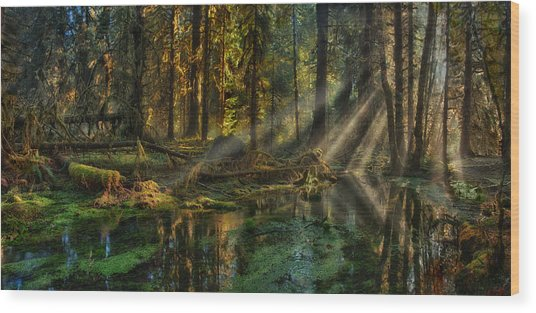 Rain Forest Sunbeams Wood Print