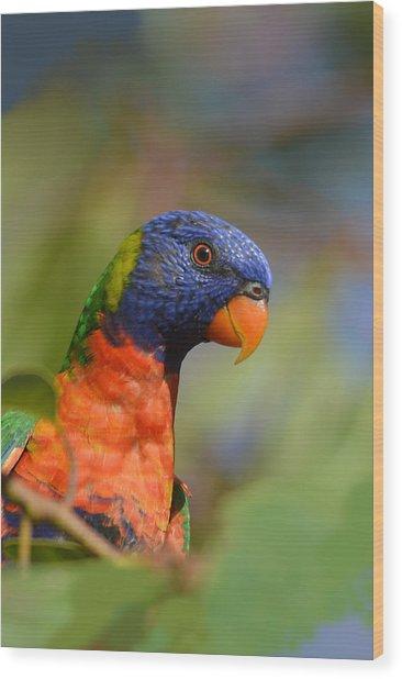 Rainbow Lorikeet Parrot  Wood Print