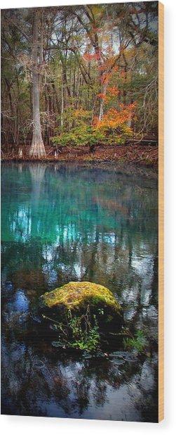 Rainbow Of Colors Manatee Springs1 Wood Print