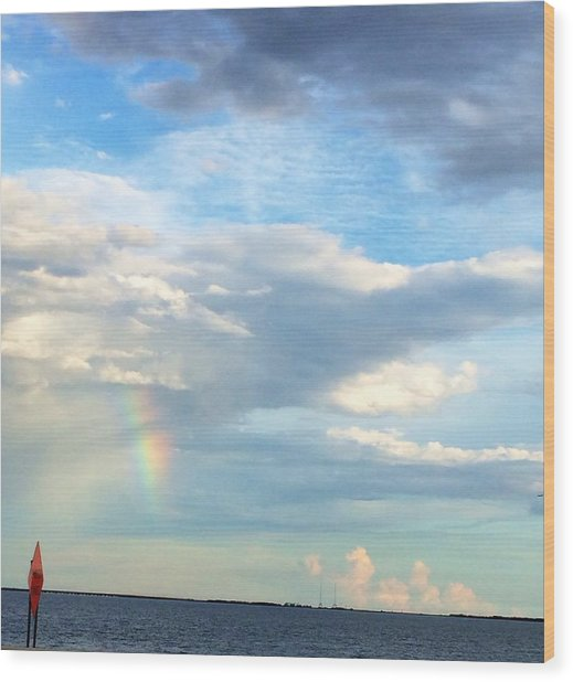 Rainbow On Laughing Dolphin With Seahorses Wood Print