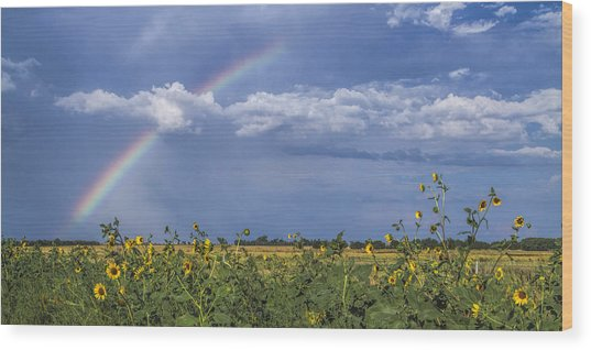 Rainbow Over Sunflowers Wood Print