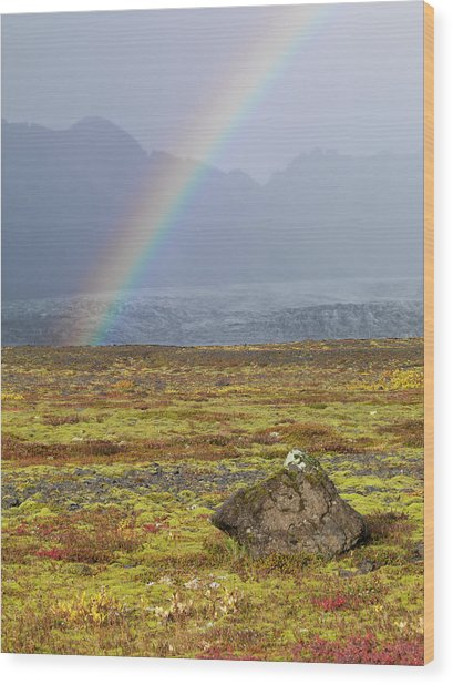 Rainbow Over Tundra With Wild Flowers Wood Print