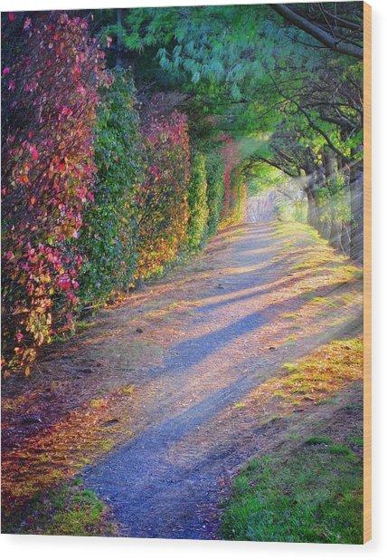 Rainbow Path Wood Print by William Schmid