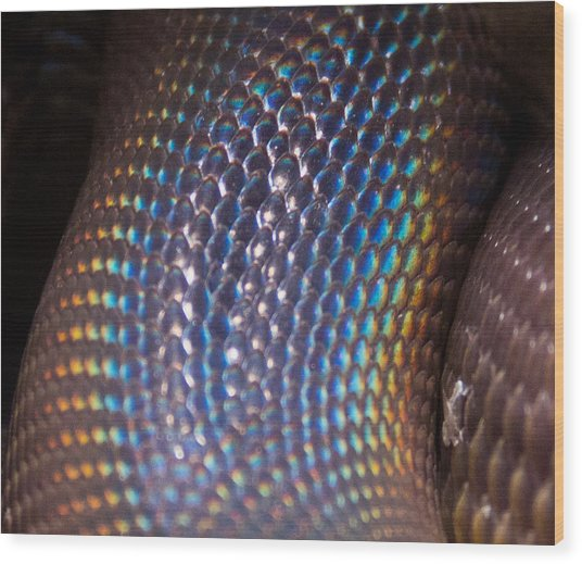 Rainbow Scales Wood Print by Debbie Cundy