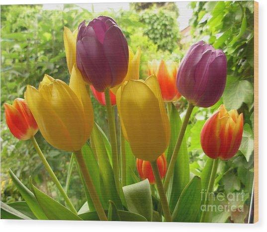 Rainbow Tulips  Wood Print