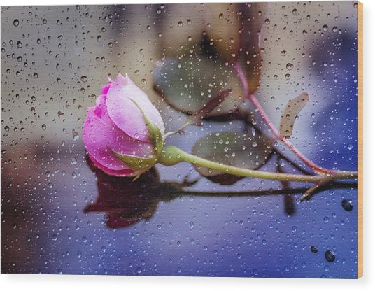 Raindrops And The Rose Wood Print