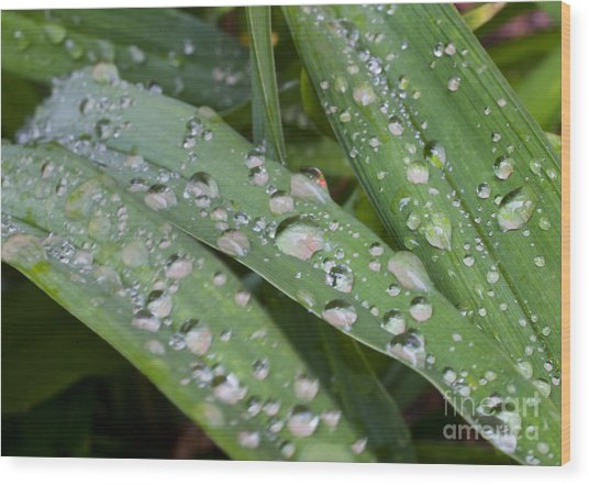 Raindrops On Daylily Leaves Wood Print by Jonathan Welch