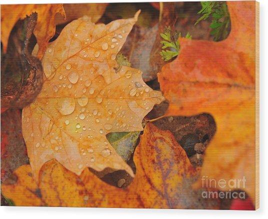 Raindrops On Fallen Maple Leaf Wood Print