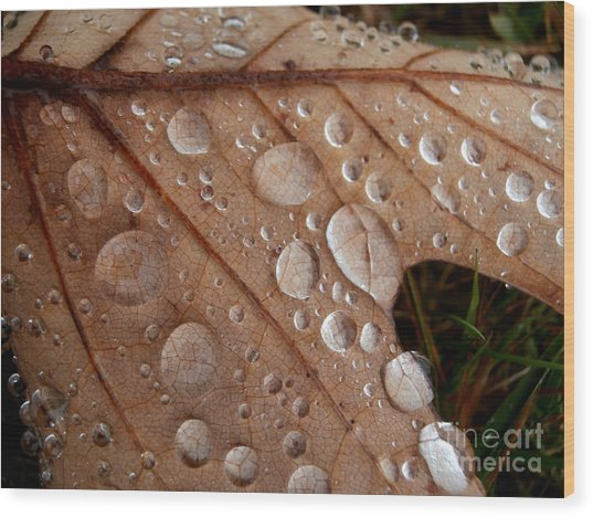 Raindrops  Wood Print by Steven Valkenberg