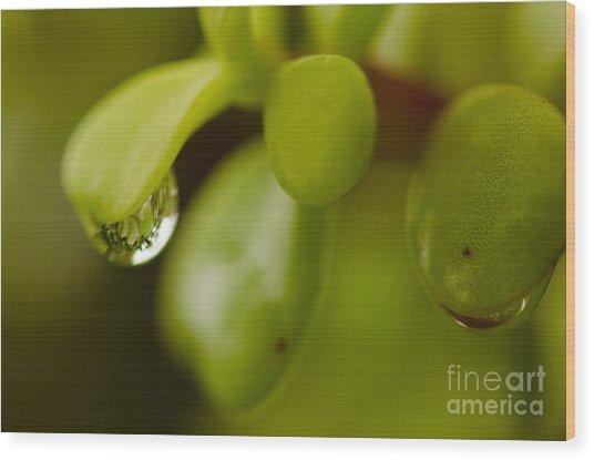 Raindrops V Wood Print