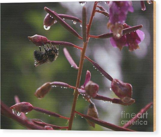 Rained Soaked Brandywine Bee Wood Print by Amanda Holmes Tzafrir
