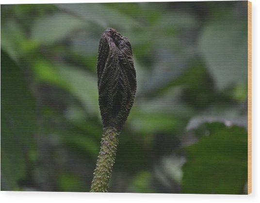 Rainforest Pod Wood Print