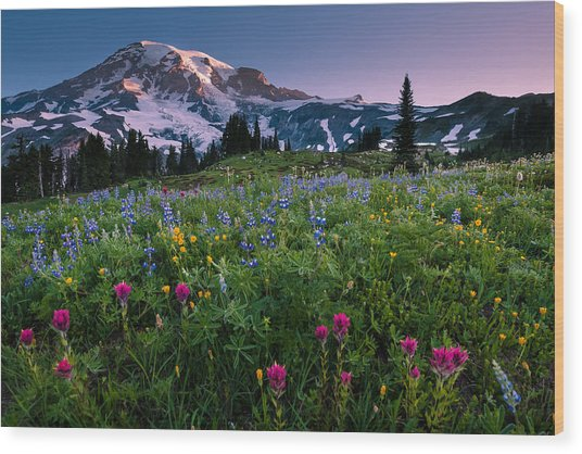 Rainier Flowering Meadow Wood Print