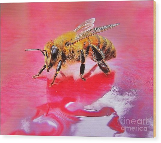 Rainy Day Bee Wood Print