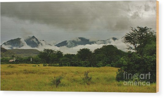 Rainy Day In Paradise Wood Print