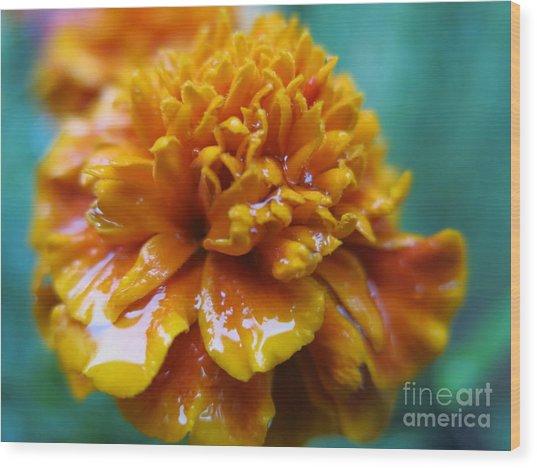 Rainy Marigolds Wood Print