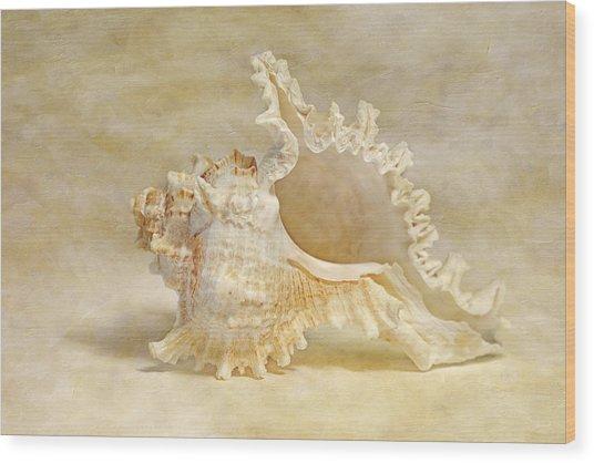 Ram's Murex Wood Print