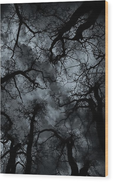 Random Thoughts - Nature Abstract Wood Print
