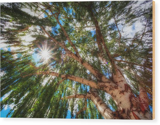 Random Tree Downtown Leavenworth Washington Wood Print by Rscpics