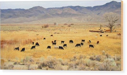 Range Cattle Wood Print