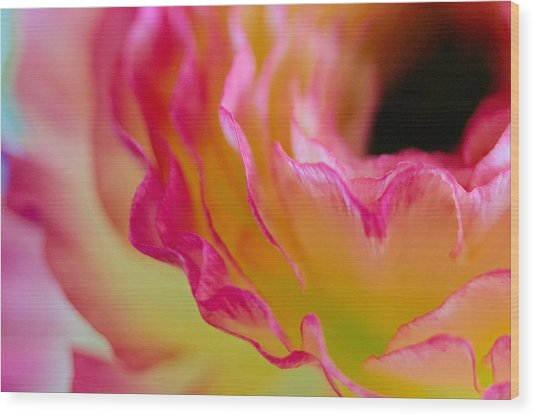 Ranunculus Ruffles Wood Print