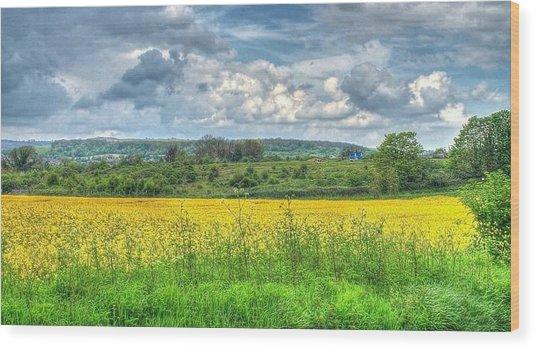 Rapeseed Field Wood Print by Paul Muscat