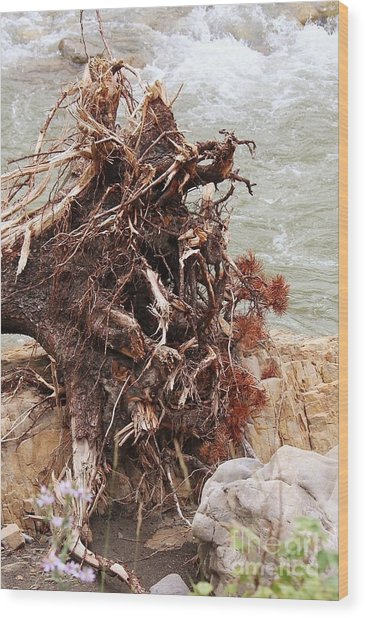 Wood Print featuring the photograph Ravaged Roots by Ann E Robson