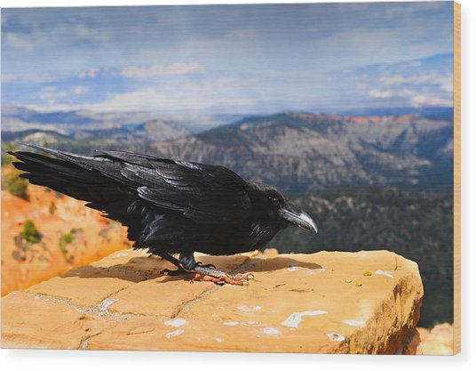 Raven Bryce Canyon Wood Print