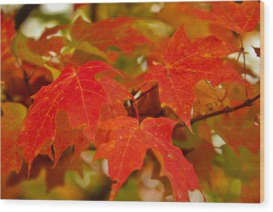 Ravishing Fall Wood Print