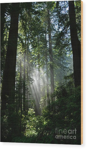 Rays In Redwoods Wood Print