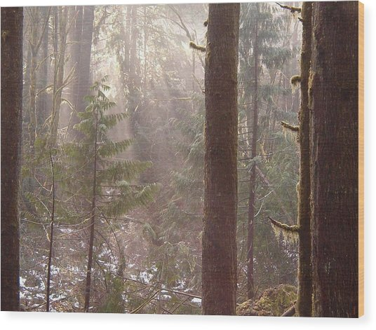 Rays Of Light In Forest Wood Print
