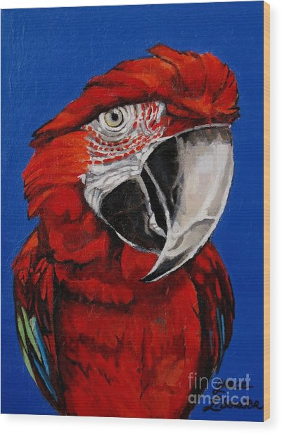 Razzy Red - Bird- Macaw Wood Print