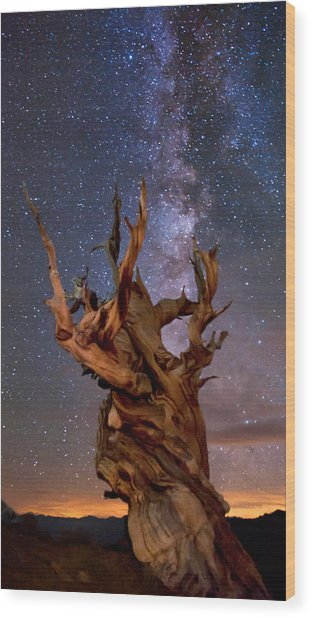 Reach For The Stars Wood Print